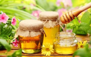 Предложение по введению в школьное питание мёда
